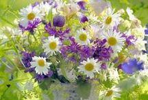 Wild Flowers Bunch / Blumenbouquet/ Blommor / Kukkakimppuja luonnonkukista / Kauneimpia kukkakimppuja ovat mielestäni aidoista luonnonkukista itse tehdyt kimput. The most beutiful flower bunchies are made from wild flowers! They are so unique!