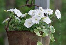 Flowers Pot Garden/ Blumen/ Blumkruka/  Kesäkukkia ruukuissa / Kauniisti aseteltuja kesäkukkia ruukuissa tai koreissa.Flowers in my style.