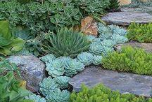 Succulents Garden /Mehikasvit