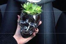 Cacti + Succulents