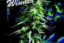 I love Bud of the Month / All winners of our Bud of the Month contest will be honored here!