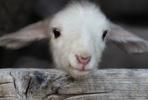 Cutest Ever / by Shannon Crandall