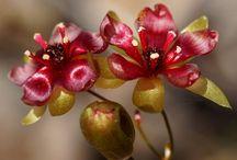 Çiçekler 2 / Photography, Flowers, Nature / by Cemil Yılmaz