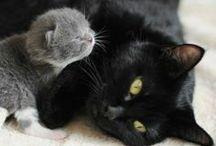 Sweet Kitties / Aquí encontrarás hermosos y dulces gatitos
