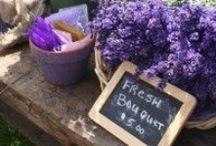 Entre violetas, morados y lilas / Lo que me inspire y se de color violeta, morado o lila.