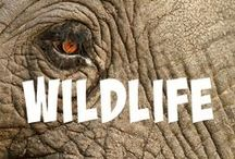 Wildlife Encounters / Tips and inspiration on getting you up close to some of the most unique wildlife encounters on the planet.