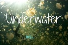 Underwater / Exploring the world beneath the waves.