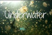Underwater / Exploring the world beneath the waves.