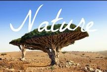 Nature / A collection of photography of the world's most beautiful nature.