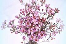 Flowers / by Erika P. Belz