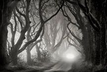 Black & White Photography / Black & White Photography