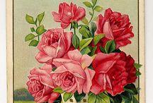 Flower Prints / Vintage Flower Prints for Paper Crafts