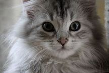 CATS / A world without cats would be CATastrophic