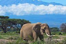 Reisen: Afrika / Der afrikanische Kontinent lädt mit seinen vielfältigen Kulturen, Tieren, Menschen und der atemberaubenden Landschaft zur Rundreise ein. Auf dieser Pinnwand findest du Inspirationen für deinen Afrikaurlaub, Safaris und viele Tipps, was bei einer Reise zu beachten ist.