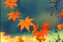 Autumn Fall Scenery