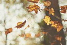 Autumn, trees etc