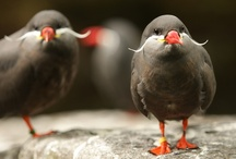 BIRDS! / by Vickie Johnson