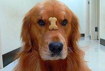 Cachorro - dog - animais