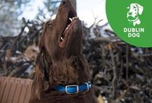 The Original All Style, No Stink Dog Collar / We're famous for our All Style No Stink collars. They rinse clean in seconds and won't absorb moisture, retain dirt, or harbor bacteria. And that's great news since, let's face it, if it's wet, muddy or stinky, your dog will find it. When he does, just rinse the collar under a bit of water and you're ready for the next adventure! / by Dublin Dog Co.