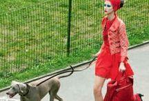 Dog walking / stylish dog walking