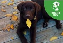 Fall | Playing In The Leaves / Get out and play in the leaves with your dog or experience the wonder outdoors this fall. / by Dublin Dog Co.