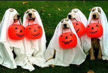 """Halloween / """"Howloween"""" things for your pets!"""