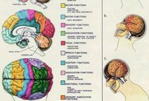 The  Brain and its Many Personalities / Hope my sarcasm isn't lost on anyone! / by Laura Pressman-McNamara