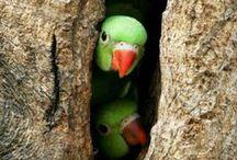 ° Les oiseaux du paradis °