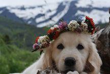 adorable animals<--