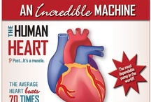 For the Heart / Tips and facts for a healthy heart.