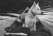 Dog on Board / Your best friend also deserves a vaca!