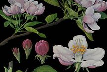 Dark Blooms
