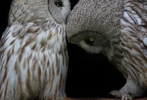 beautiful owls / by Amber Jay