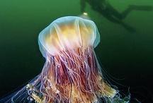 jelly fish / by Amber Jay