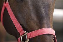 Horses   Hevoset