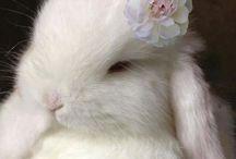 Rabbits   Puput