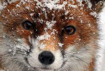 Winter   Talvi