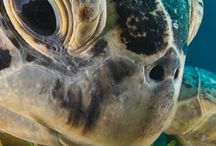 Sea Life   Meri Elämää