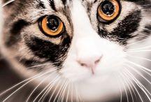 Cats   Kissat / Cats   Kissat