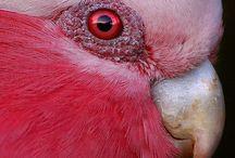 Parrots   Papukaijat