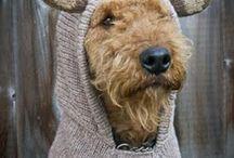 Dog clothes   Koiran vaatteet