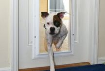 Roommates  / Many would agree that a four-legged friend is the perfect addition to your home