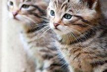 Katter / Mjau