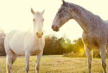 Horses&Ponies