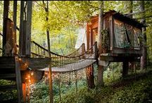 Treehouse dreams ~
