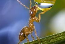 STAY HYDRATED / these ants know what they're doin. just look at their skin. it's so CLEAR it's GLOWING #goals. like what highliter are u using?? nah is just water. take inspiration from this, see and learn, let these wise ants show u tha secret and you will find succes in life. 10/10 recomend