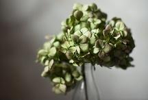 Flowers. / by Kinzie Mill