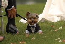 Wedding- Ideas / Tips, Tricks, and Advice / by Jenna Eyermann