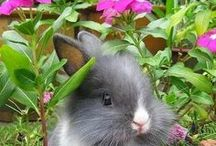 Adorable Animals / Cute puppies, kittens. bunnies, horses, and other animals!