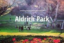 UC Irvine Campus / Photos of the beautiful UC Irvine campus.